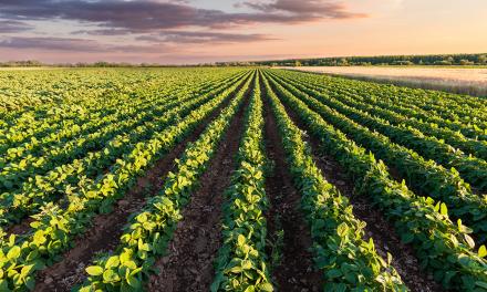 AMWAY NUTRILITE: SUSTENTABILIDADE NO AGRONEGÓCIO