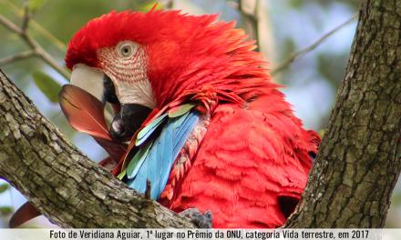Arisp: registradores imobiliários paulistas colhem os frutos do seu sistema de gestão ambiental