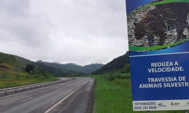 Monitoramento da fauna aumenta segurança e reduz atropelamentos em trecho da Concer na BR-040